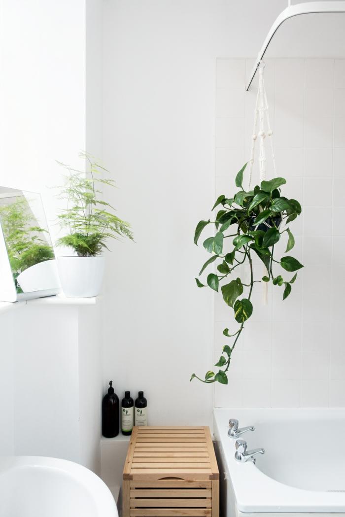 1001 Ides Pour Votre Plante Pour Salle De Bain