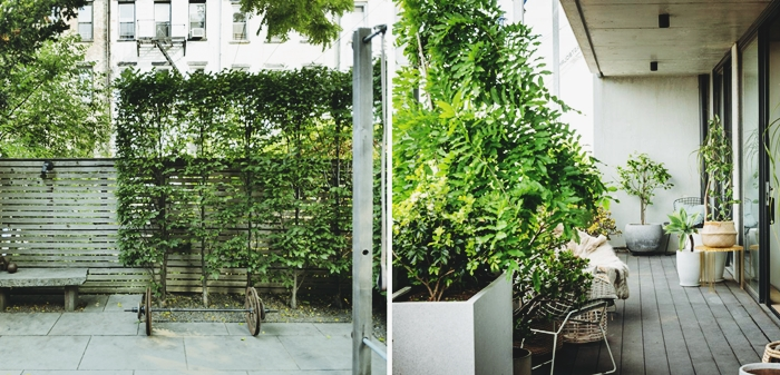plante brise vue pour balcon ou jardin