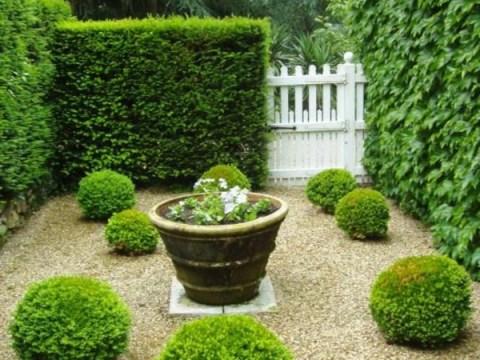 gartengestaltung mit buchs buchsbaum formen - einige tipps und beispiele - archzine