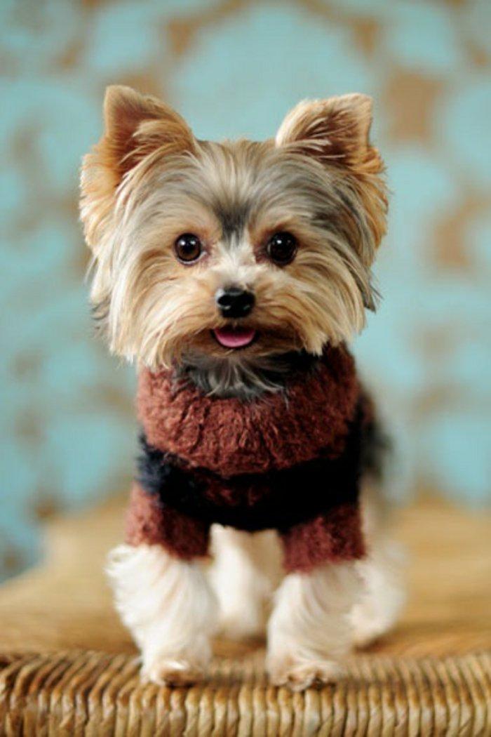 Die Sesten Bilder Von Hunden