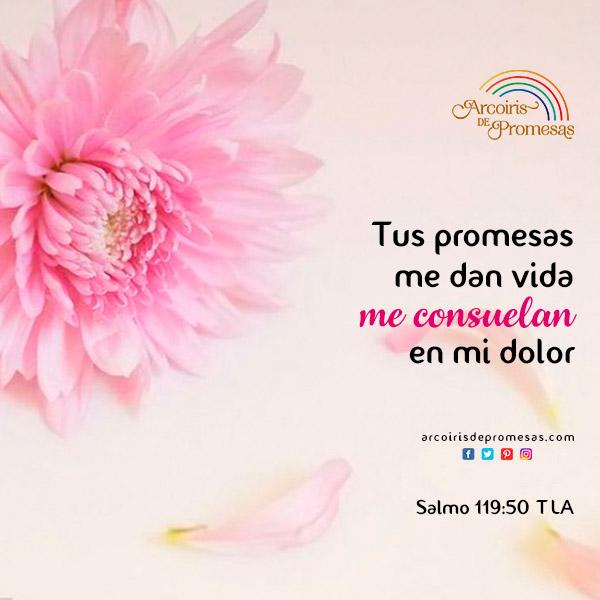 las promesas de dios dan consuelo mensaje de aliento para la mujer cristiana
