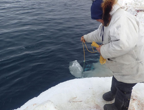 Billy Adams taking CTD casts near Utqiaġvik.