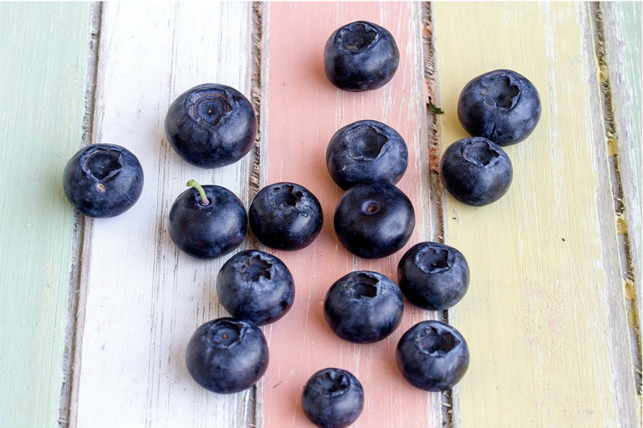 Wild Arctic blueberries, also called bilberries, freshly picked, before freeze-drying and powdering.