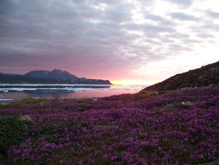 Summer Arctic Sunset