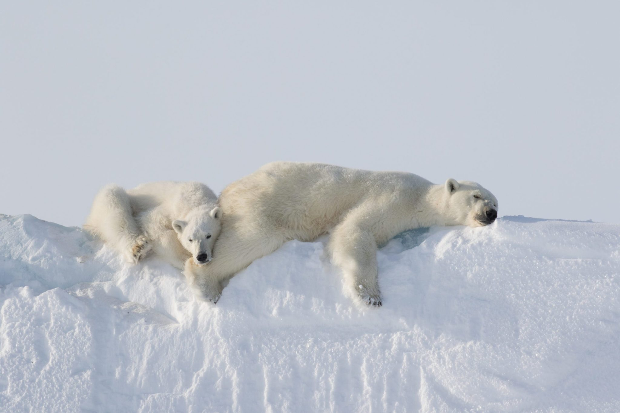 6 Tips For Incredible Arctic Photography