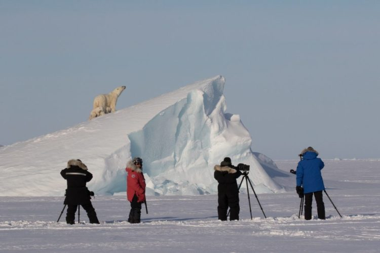arctic kingdom photography polar bears on iceberg
