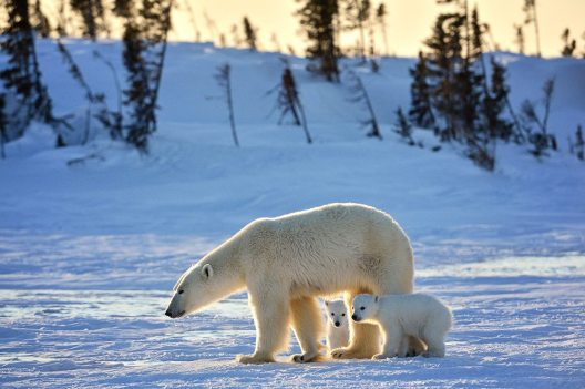 Polar Bear Lodge_ by Michelle Valberg _D4S4996