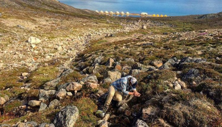 Foraging the Tundra