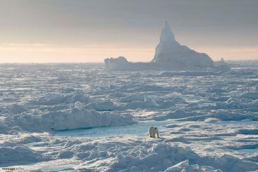 Francois Gervaise - iceberg and polar bear