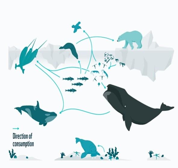 Floe edge food chain