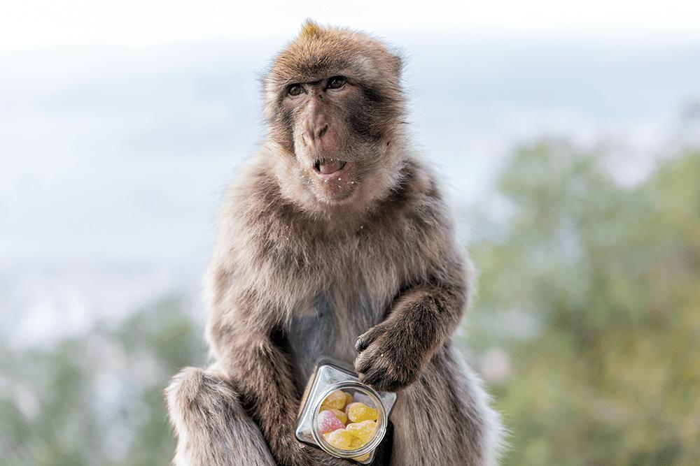 rockhaven_monkey