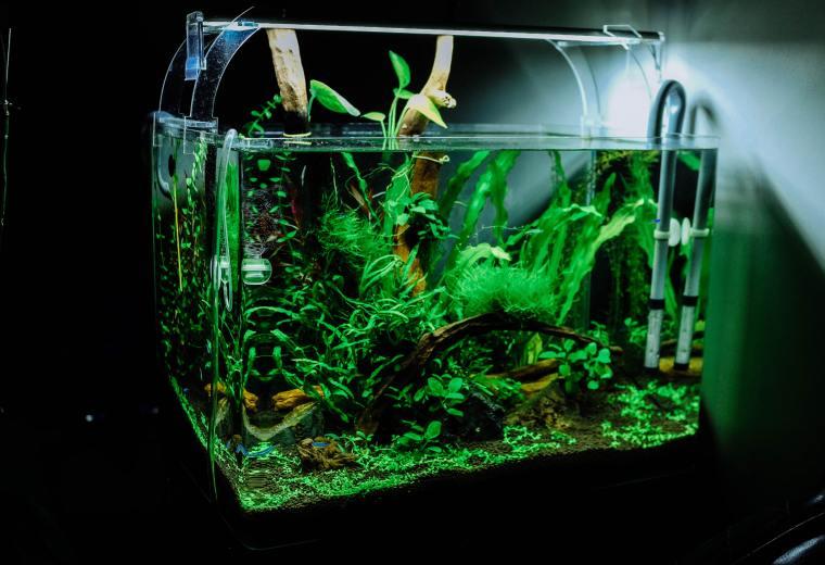 carbon dioxide in the Aquarium