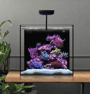 Waterbox Cube Aquarium