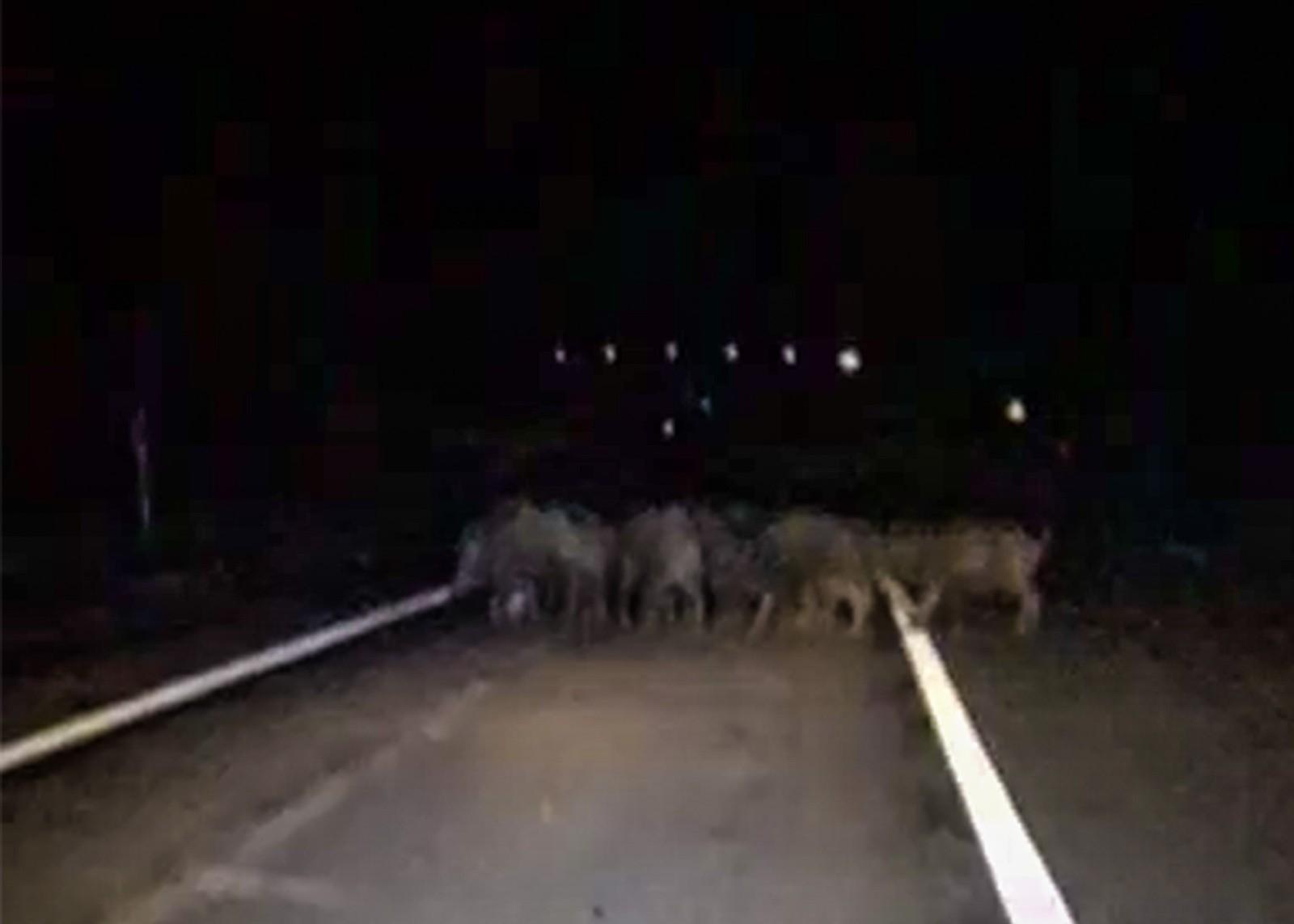 Karayoluna çıkan domuz sürüsü görüntülendi