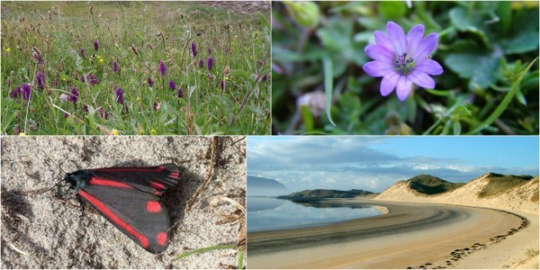 Guided walk and talk at Sheskinmore Saturday 27th May