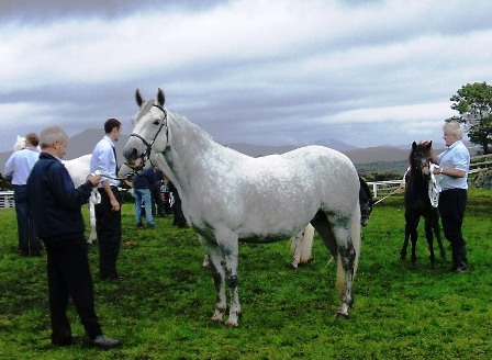 Champion of 7 to 12 yr old Mares Lakeside Lass
