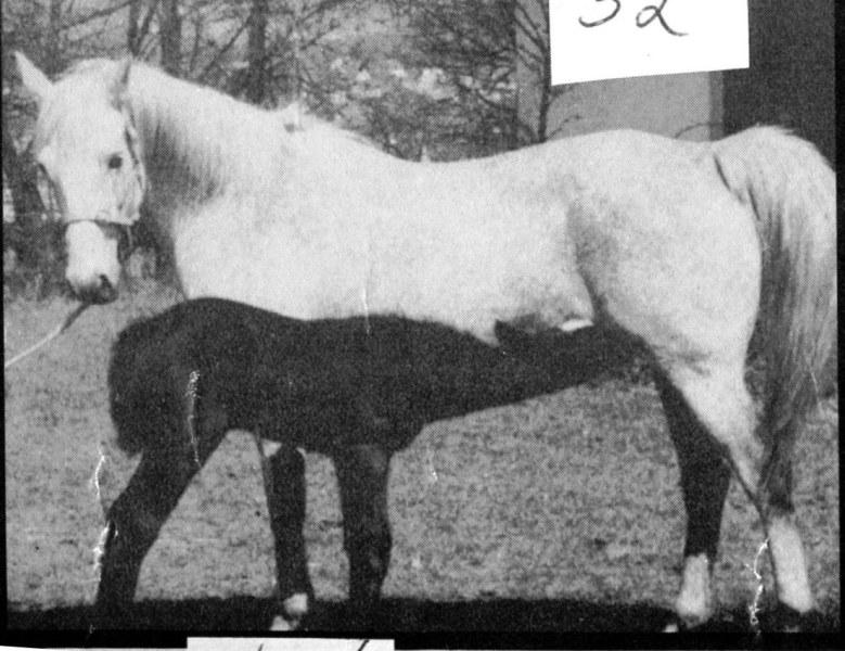 white mare black foal