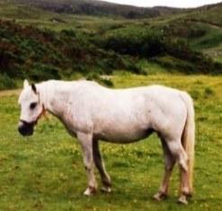 Ganty Heather early nineties in Connemara Park