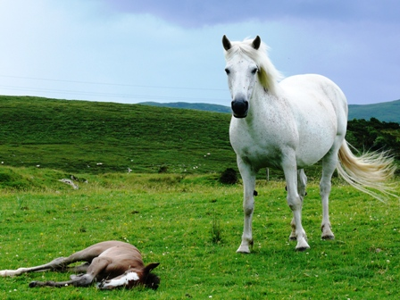 Park Erica with foal. Erica was by Murphy Reberl out of Ganty Heather