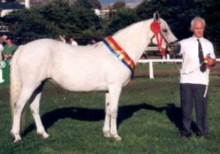 Coral Misty, Clifden Supreme 1995 and 1997 with Bobby Bolger