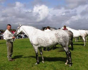 Cashelbay Heather won the Mare 4-6yrs. class. with Gerry King