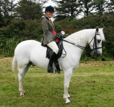 Smokey Biscuit won over 16 Ridden, Gelding class and Reserve Champ.