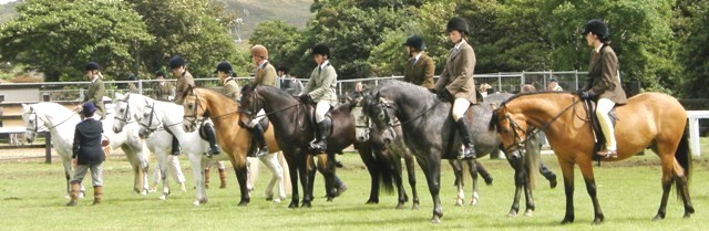 a line-up of 4 and 5yr old ridden ponies Class C