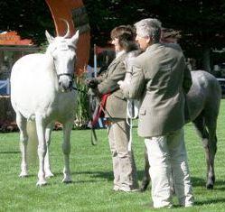 Champion pony Glenmore Kelly's Owen with Francis O'Reilly