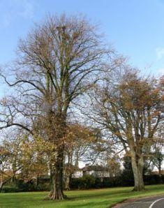 1 Autumn trees