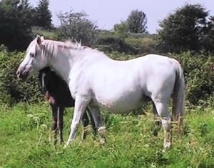 Curraqchmore Cashel & T.BridgePIC_0107