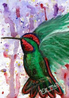 Hummingbird on a colorful splash pattern background. Hand painted, original Watercolor. Item # HPGC1215