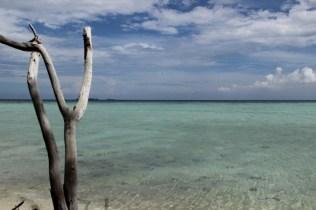 laut biru pantai cemara kecil