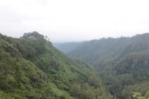 hutan sekitar tebing keraton