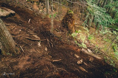 Ruts and Roots