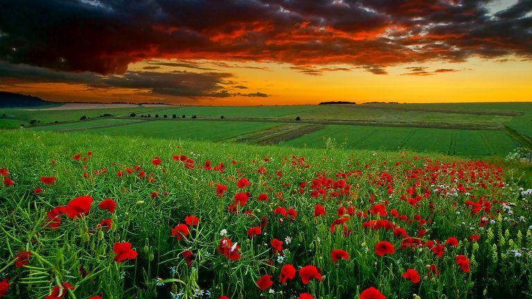 Beautiful-Flower-Field-Nature-HD-Photos-768x432