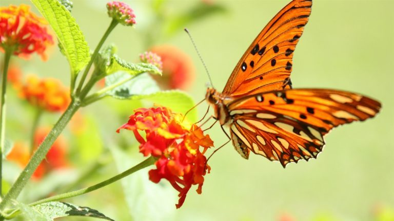 Butterfly-and-flowers-1080p-hd-photos-nature-768x432