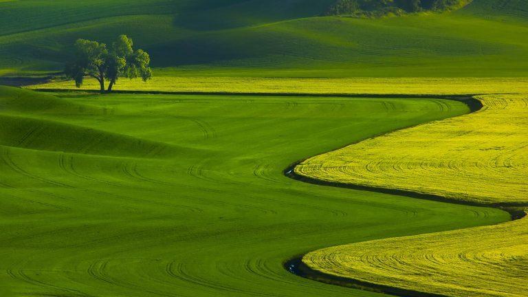 Green-Grass-Field-1080p-Nature-Wallpaper-768x432