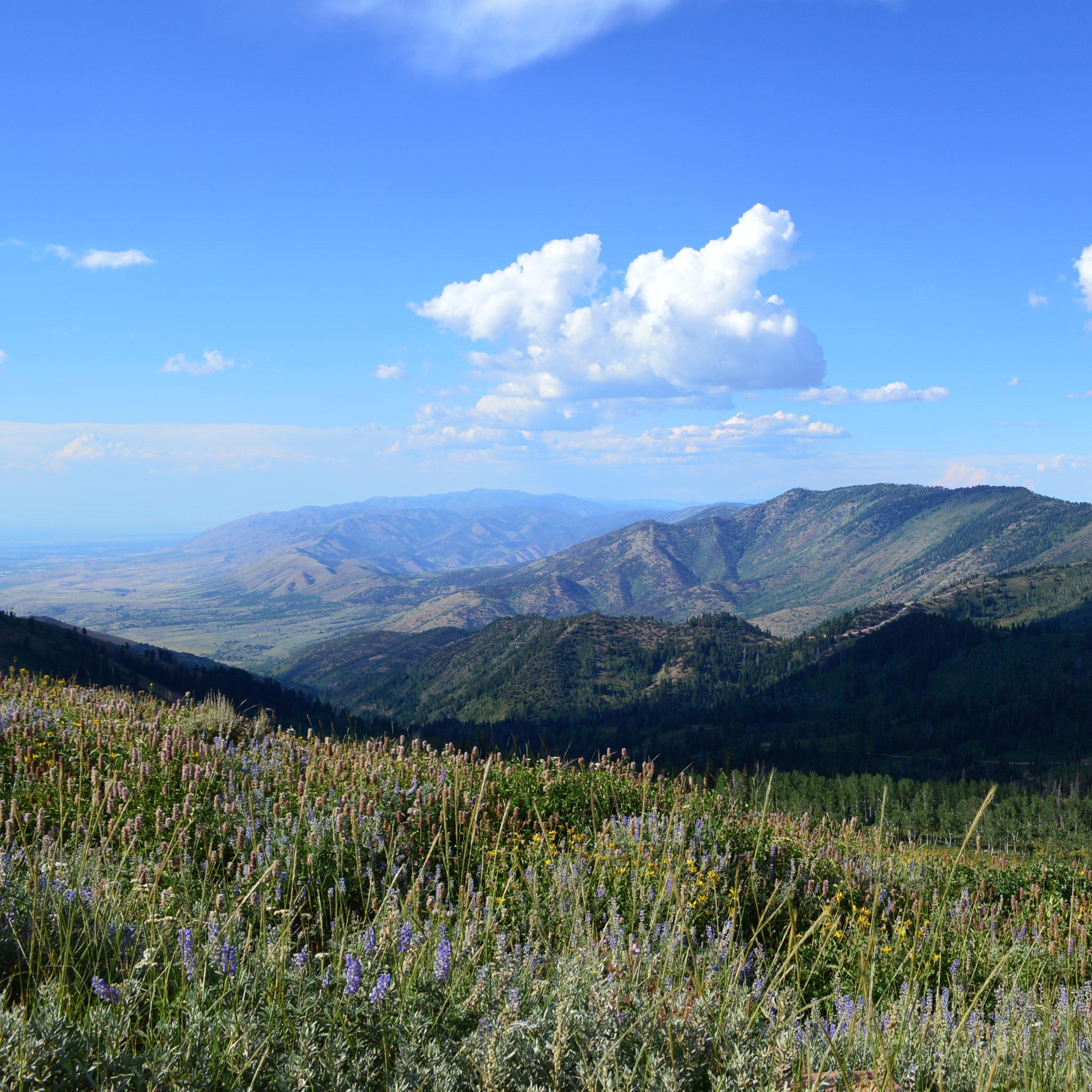 A Mountain Retreat in Eden (Utah) | ARExA