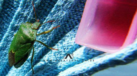area12design_bug_20071-1024x576