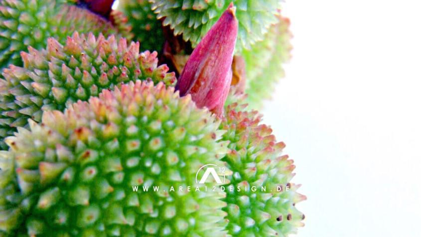 area12design_canna_fruit_20071-1024x576