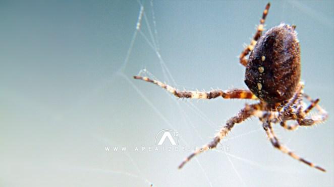 area12design_spider_2007-1024x576