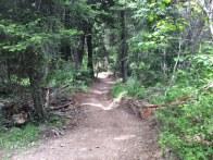 New Harper bike trail