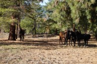 Some of the residents at the ranch.