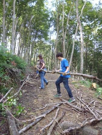 forestal-4
