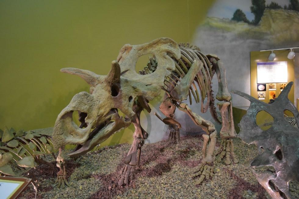 Thermopolis Dinosaur Museum_0547