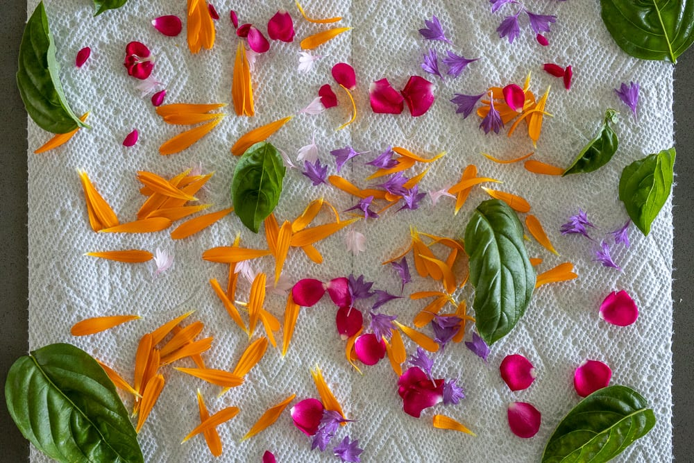 edible flowers and herbs drying on paper towel