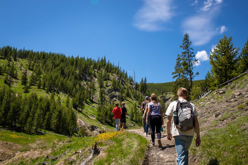 group of people walking on a hill with trees and grass in yellowstone national park