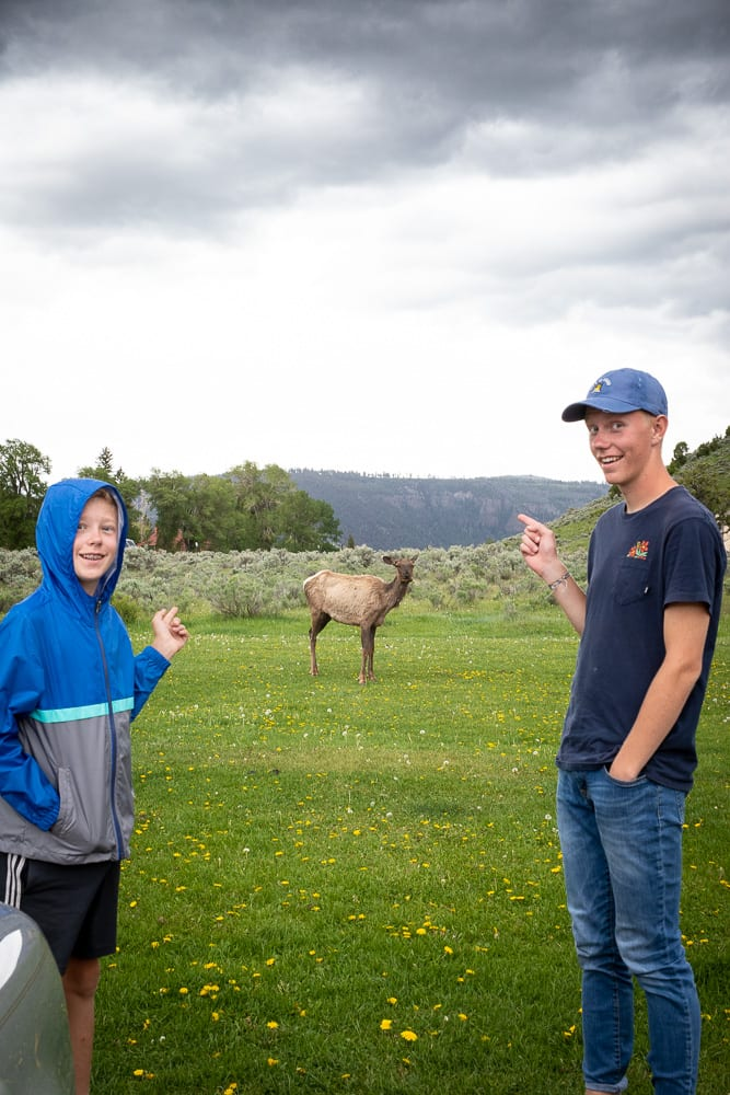 two boys standing by an elk