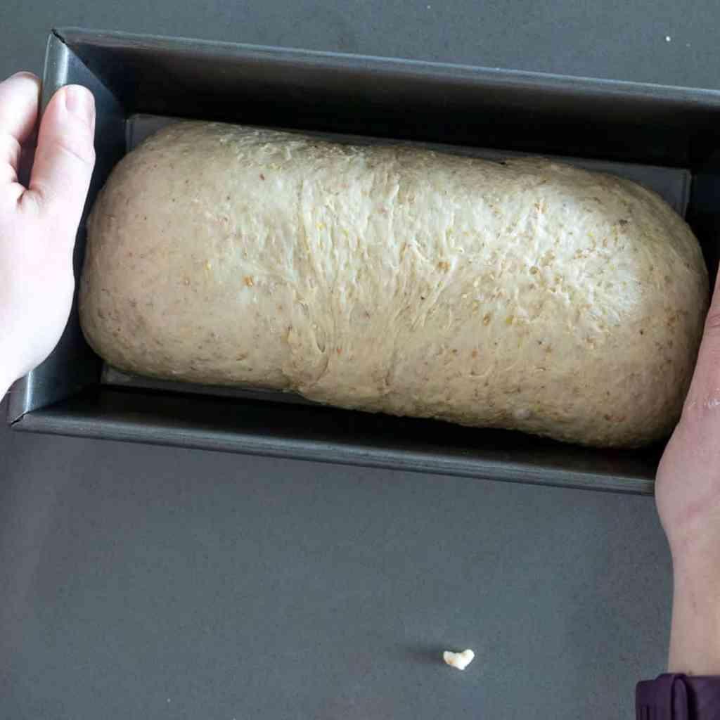 multigrain bread in a bread pan ready to rise