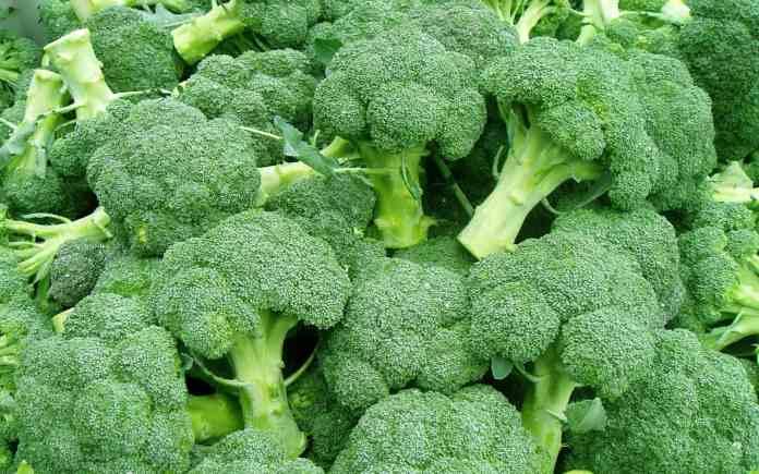 Heat-tolerant broccoli